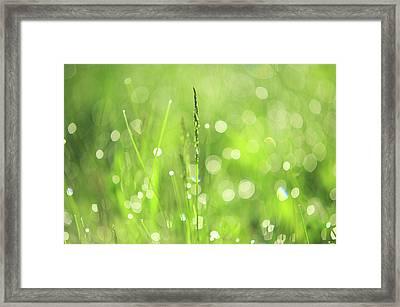 Morning Fairies. Green World Framed Print by Jenny Rainbow