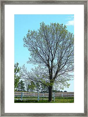Morning Fields Framed Print by Wild Thing