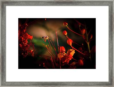 Morning Flight Framed Print by Mark Dunton
