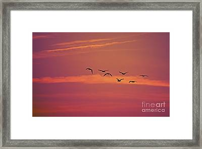 Morning Flight.. Framed Print by Nina Stavlund