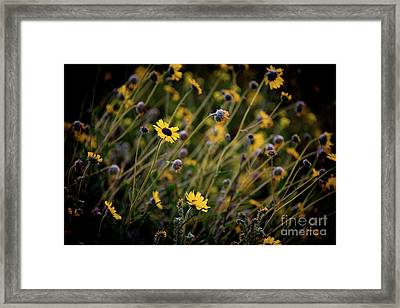 Framed Print featuring the photograph Morning Flowers by Kelly Wade