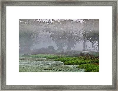 Morning Fog At Brazos Bend Framed Print