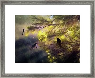Morning Forest Light Framed Print