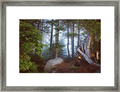 Morning Forest Light Framed Print