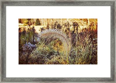 Morning Frost Framed Print by JAMART Photography