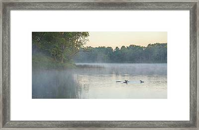 Morning Gathering Framed Print