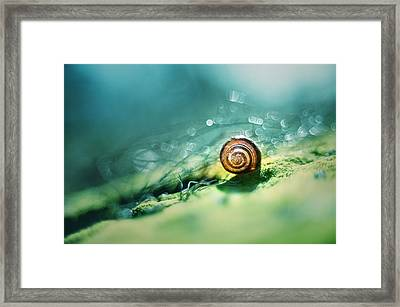 Morning Glare Framed Print by Jaroslaw Blaminsky
