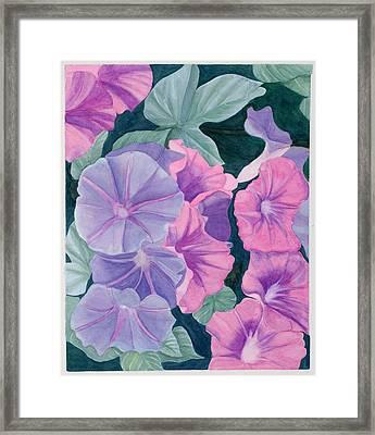 Morning Glories Framed Print by Barbara Pascal