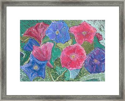 Morning Glories Framed Print by Hillary McAllister