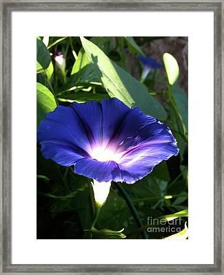 Morning Glorious Framed Print