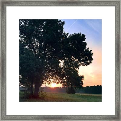 morning glory 16AUG15 Framed Print by Greg Joens