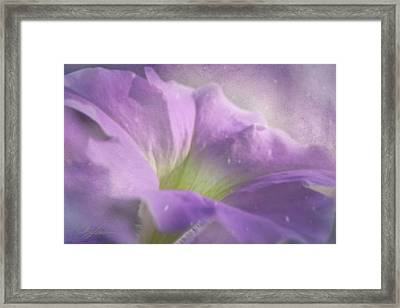 Morning Glory Framed Print by Ann Lauwers