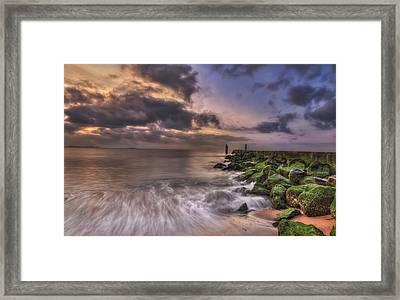 Morning Glory Framed Print by Evelina Kremsdorf