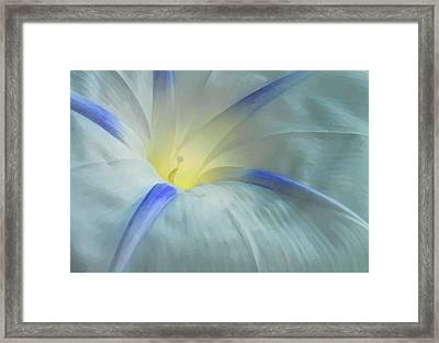 Morning Glory Framed Print by Gene Sizemore