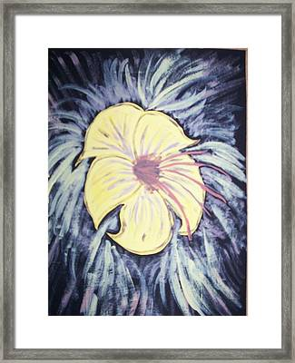 Morning Glory Framed Print by Laura Lillo