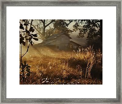 Morning Glory Framed Print by Lori Mellen-Pagliaro