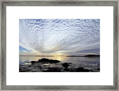 Morning Glory Framed Print by Scott Nelson