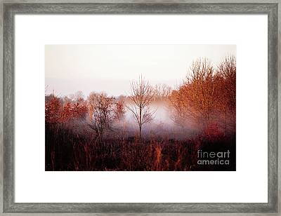 Morning Glory Framed Print by Scott Pellegrin