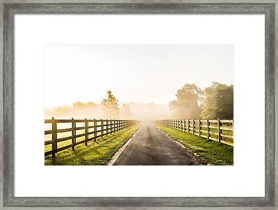 Morning Glory Framed Print by Shelby  Young