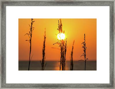 Morning Glow Framed Print by AM Photography