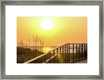 Morning Gold Framed Print by AM Photography