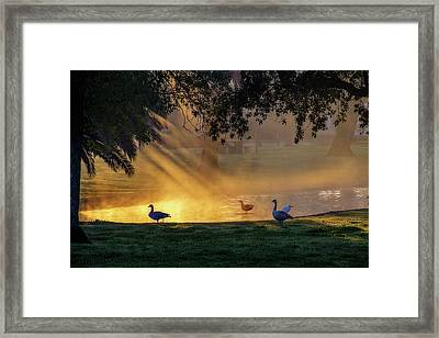 Morning Gold Framed Print