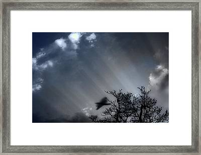 Framed Print featuring the photograph Morning  by Gray  Artus