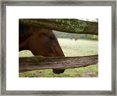 Morning Greeting Framed Print