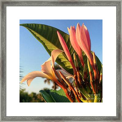 Morning Heaven Framed Print