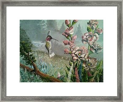Morning Hummingbird Framed Print
