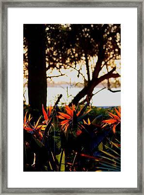 Morning In Florida Framed Print