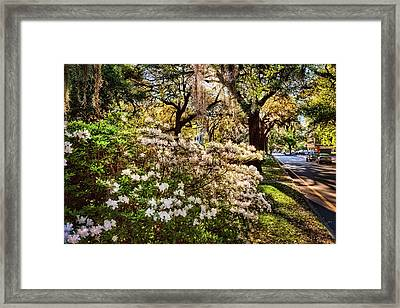 Morning In Savannah Framed Print by Diana Powell