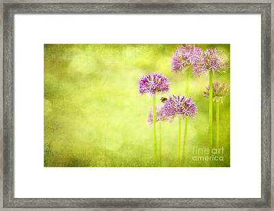 Morning In The Garden Framed Print