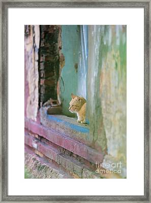 Morning In The Temple A Cats Perspective Framed Print by Mike Reid