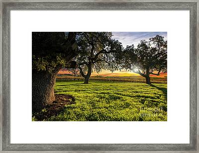 Morning In Wine Country Framed Print by Jon Neidert