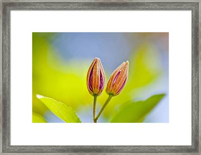 Morning Joy Framed Print by Az Jackson