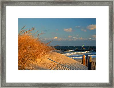 Morning Light - Cape Cod Bay Framed Print by Dianne Cowen