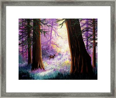 Morning Light Deep In The Redwoods Framed Print by Laura Iverson