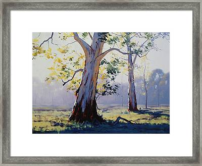 Morning Light Eucalypt Framed Print