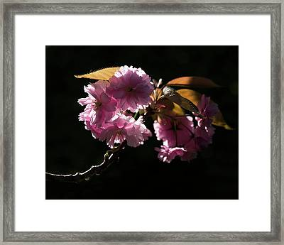 Framed Print featuring the photograph Morning Light by Helga Novelli