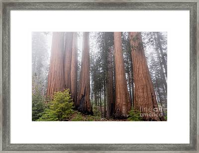 Framed Print featuring the photograph Morning Light In The Forest by Peggy Hughes