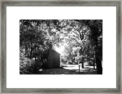 Morning Light In The Woods Framed Print