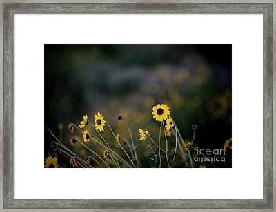 Framed Print featuring the photograph Morning Light by Kelly Wade