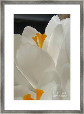 Morning Light Framed Print by Kristine Nora