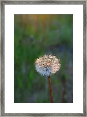 Morning Light Framed Print by Marilynne Bull