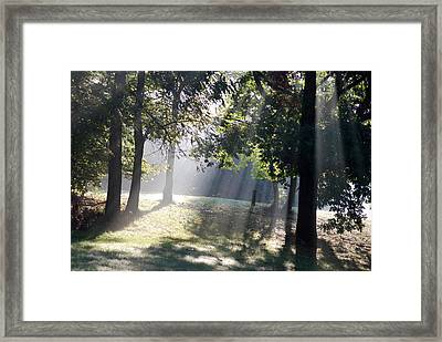 Morning Light Framed Print by Michael Peychich
