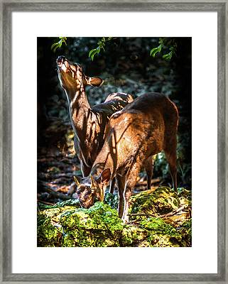 Framed Print featuring the photograph Morning Light Of Dawn by Karen Wiles