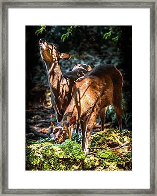 Morning Light Of Dawn Framed Print by Karen Wiles