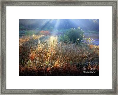 Morning Light On The Marsh Framed Print
