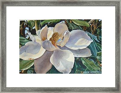 Morning Magnolia Framed Print by Marion  Hylton